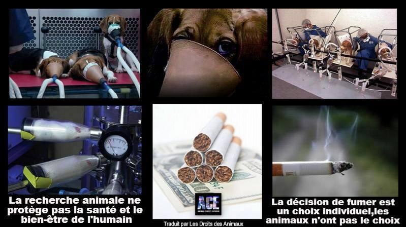 test sur les animaux - vivisection