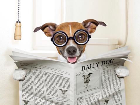 Nouvelles des chiens à l'adoption
